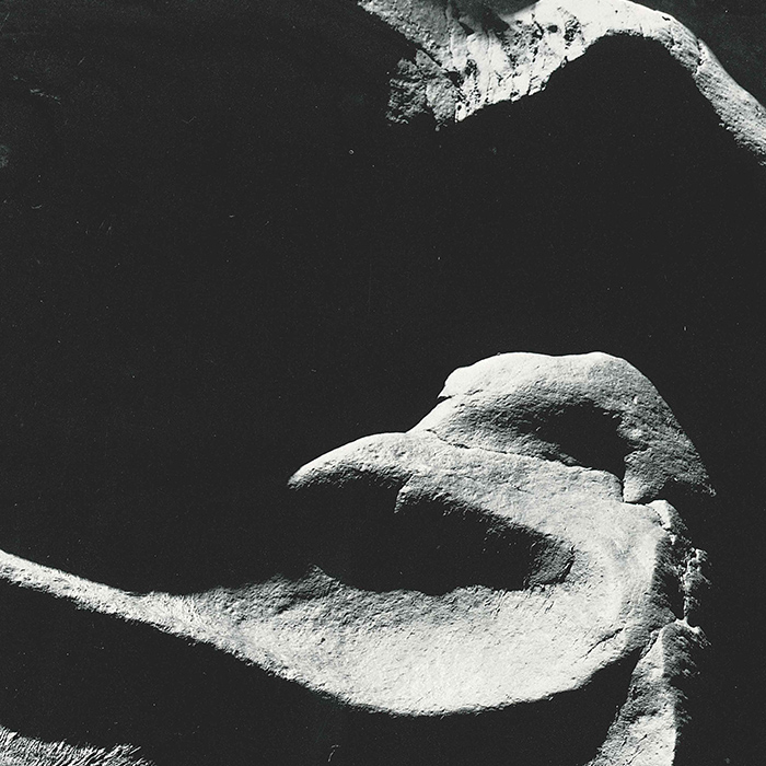 Sculptured Birds by Minor White