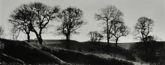 Wicklow Trees photograph